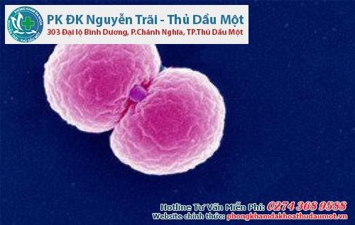 Song cầu khuẩn lậu là tác nhân truyền bệnh