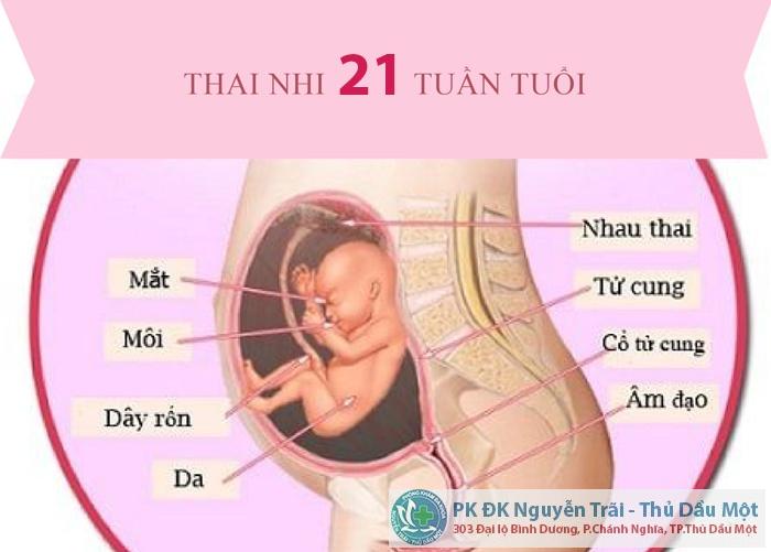 Cách đình chỉ thai 21 tuần
