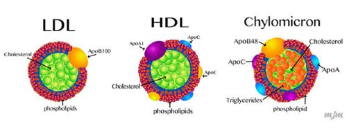 hdl-ldl-cholesterol là gì