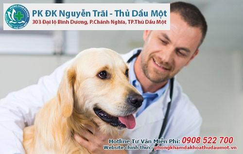 bệnh viện thú y có rất nhiều dịch vụ