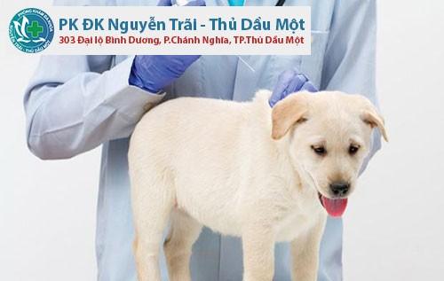 bệnh viện cho chó ở bình dương | phòng khám thú ý dĩ an