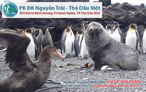 Chuyện lạ có thật: Hải cẩu ÂN ÁI với chim cánh cục?