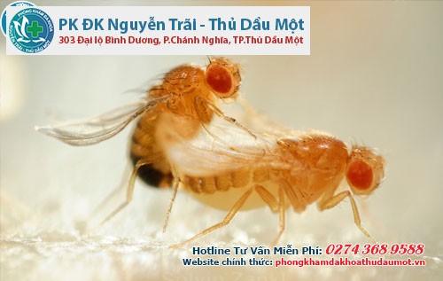 Vấn đề gì làm cho loài ruồi có những phản ứng trái chiều?
