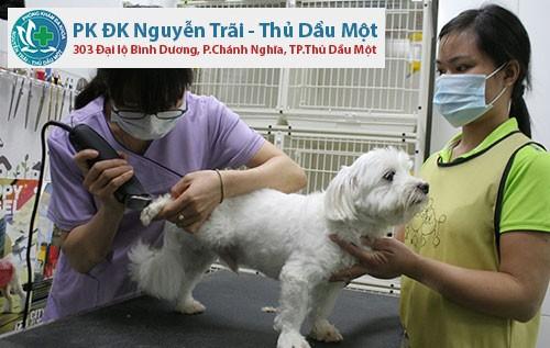 Một số dịch vụ chăm sóc thú cưng tại bệnh viện cho chó ở Bình Dương