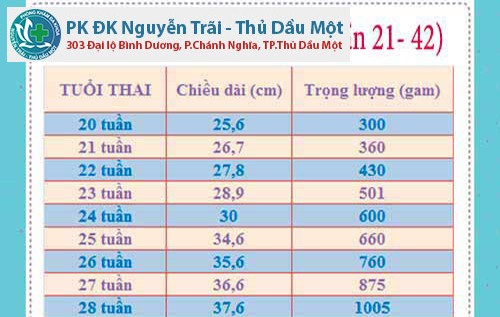 Thai 24 tuần là mấy tháng?