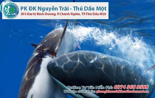 Cách yêu dữ dội của cá mập vây đen là cắn