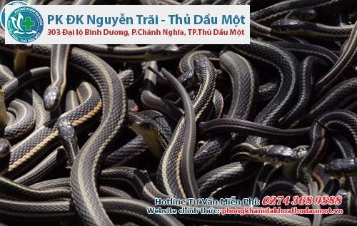 Quan hệ tập thể một chiến lược quan hệ khác của loài rắn