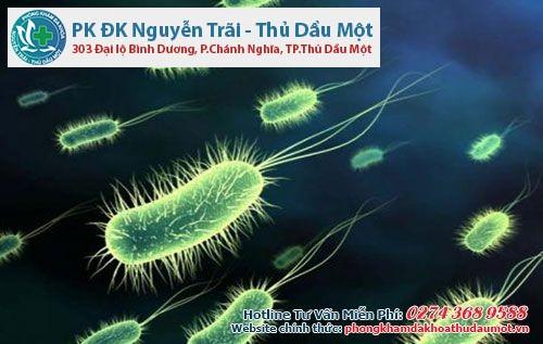 Vi khuẩn E.coli -  nguyên nhân viêm niệu đạo nam giới