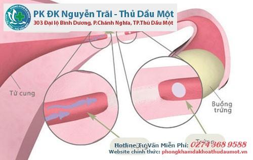 Ống dẫn trứng đóng vai trò quan trọng trong việc thực hiện chức năng sinh sản của nữ giới
